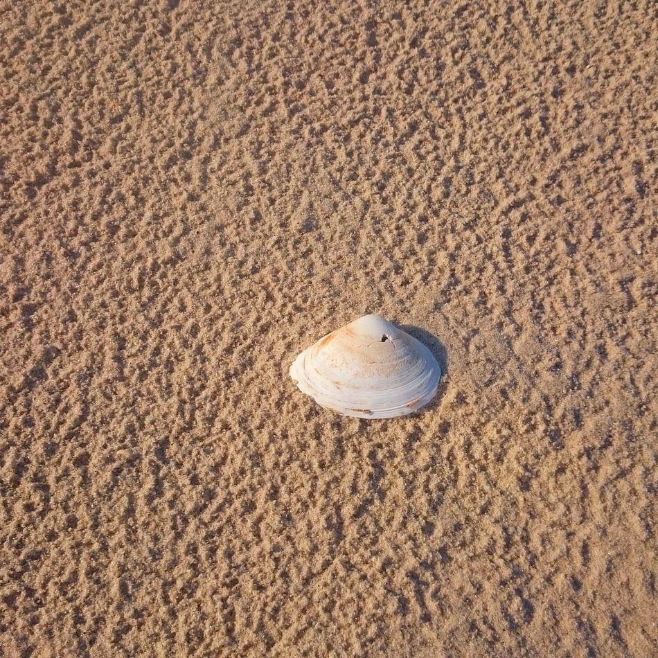 Sand Beach Tranquility Outdoors Non-urban Scene Tranquil Scene Scenics Nature Seashore Scenics Shore Tranquil Scene Coastline Tranquility Tourism Seashell Seashell Beach Summer Seashells