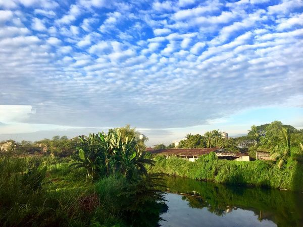 Morning calm Sky Cloud - Sky No People Tree Architecture Building Exterior Scenics Day Tranquil Scene Water Outdoors Nature Plant Growth Tranquility Beauty In Nature Built Structure Landscape