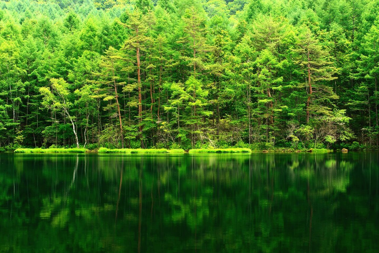 reflection, nature, tree, lake, forest, growth, green color, lush foliage, no people, beauty in nature, tranquil scene, water, tranquility, outdoors, plant, day, scenics
