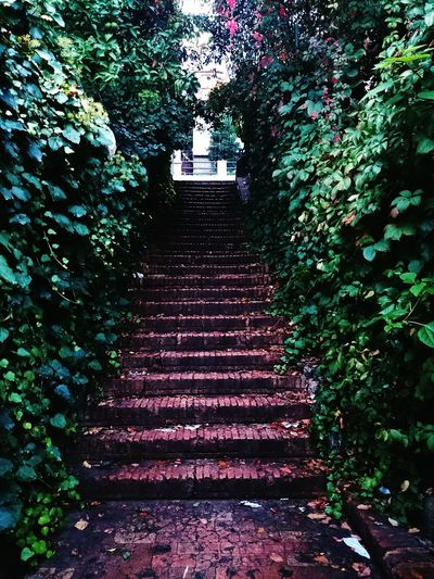 between Villas Trees Rainy Day Drops Green the Stairs Steps