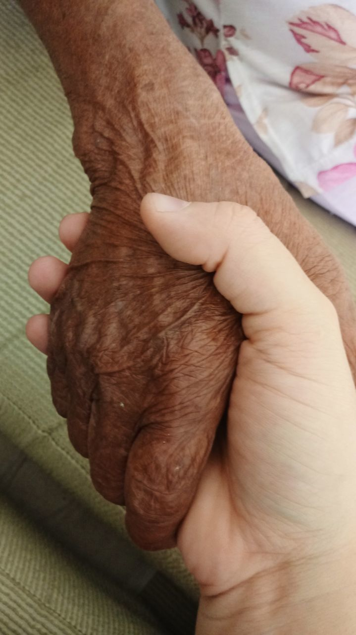 human hand, human body part, indoors, real people, one person, high angle view, bonding, holding, care, close-up, pets, domestic animals, mammal, day, adult, people