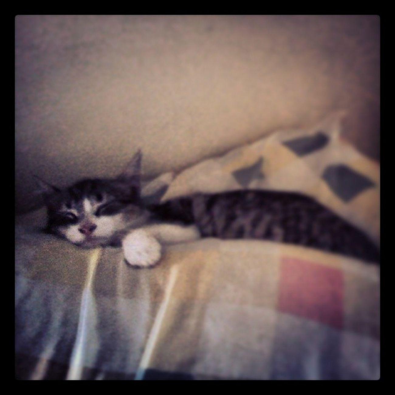 Mi Gatita  Durmiendo :3