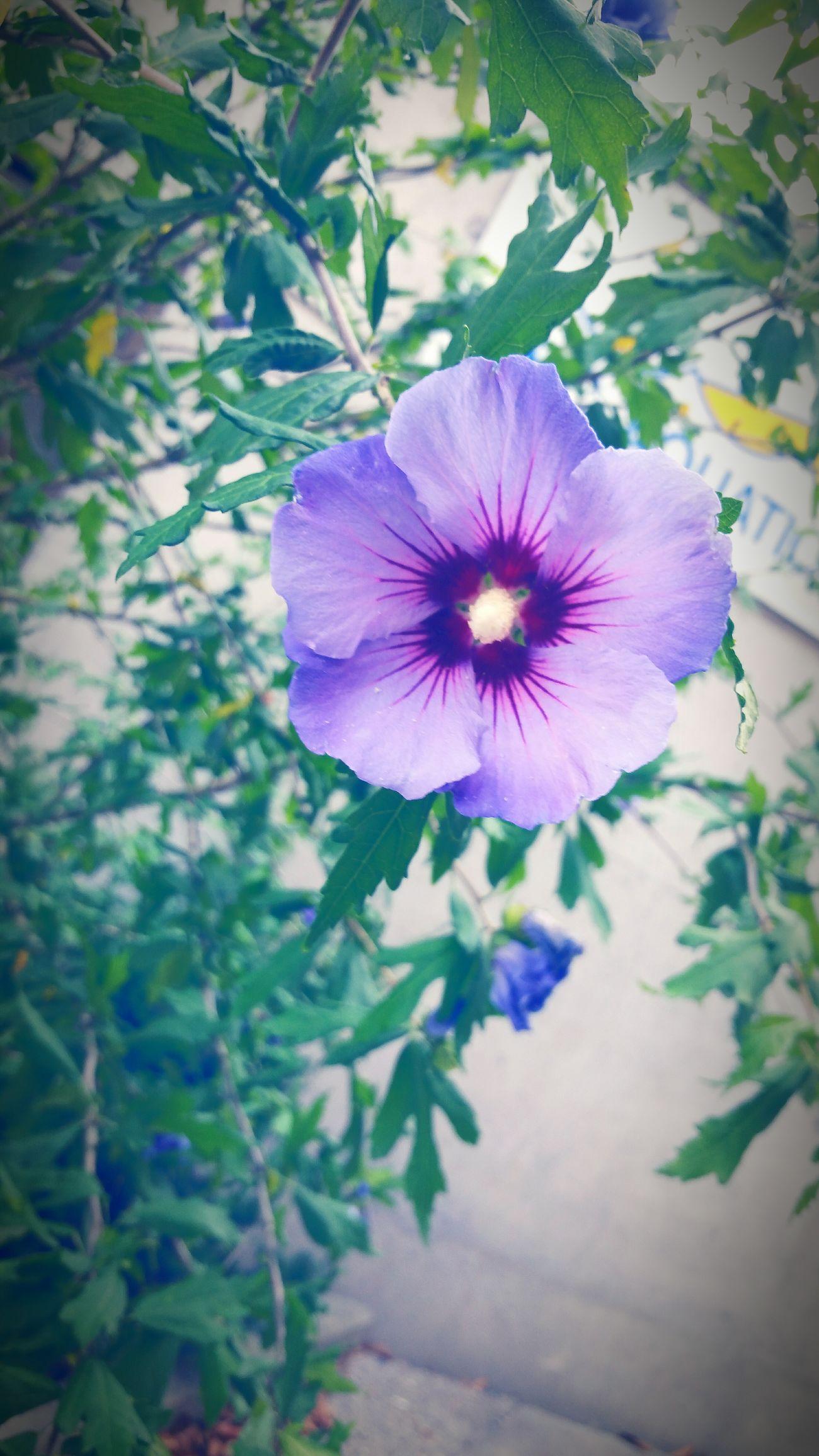 Flowers Friends UBC Pretty :) Love ♥ Purple Vancouver Vancity#gorgeous FunUniversityofbritishcolumbia