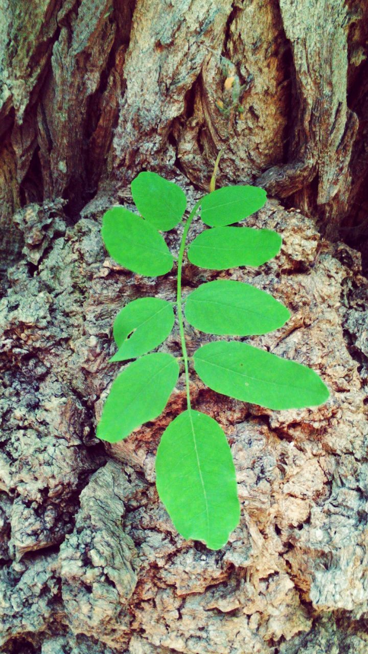 leaf, tree trunk, green color, no people, day, nature, growth, textured, close-up, outdoors