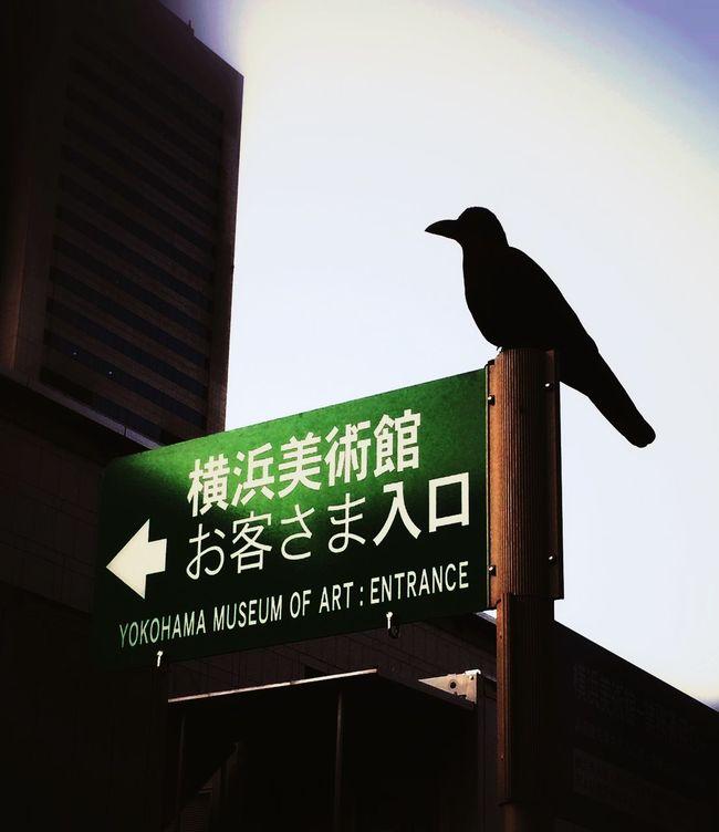 Capture The Moment Exhibition Japan Yokohama Interesting Pieces Birds A guardian of museum