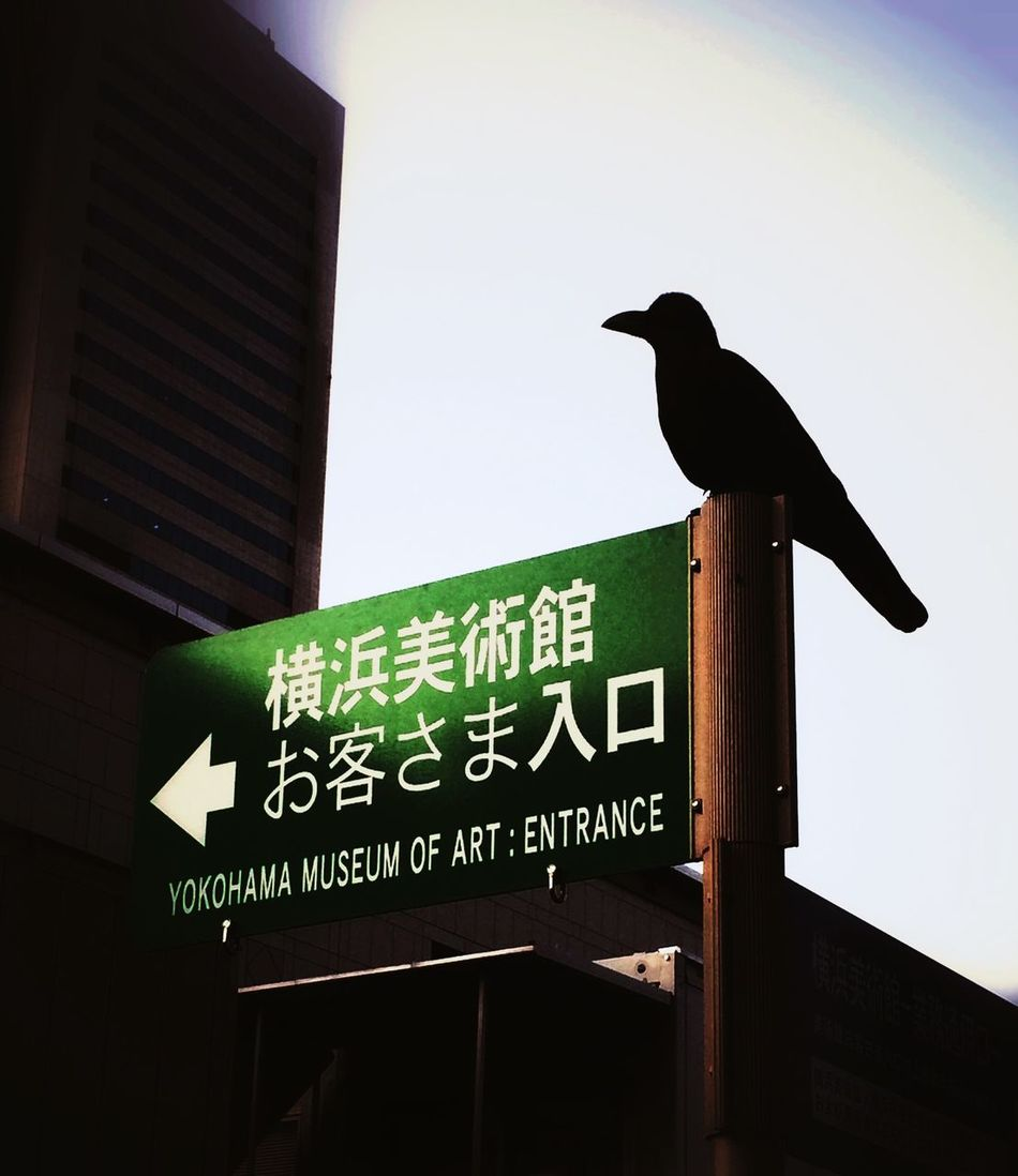 Capture The Moment Exhibition Japan Yokohama Interesting Pieces Birds A guardian of museum