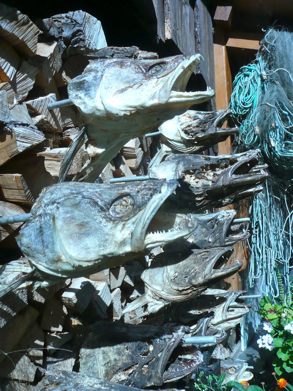 Animal Animal Themes Catch Of Fish Close-up Fish Fish Heads Fish Remains Food Gone Fishing.. Holidays No People Not Fresh Open Fish Mouths Outdoors Seafood Smoked Fish Tourist Attraction