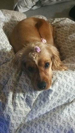 Dog❤ Dogslife Puppy Doglover