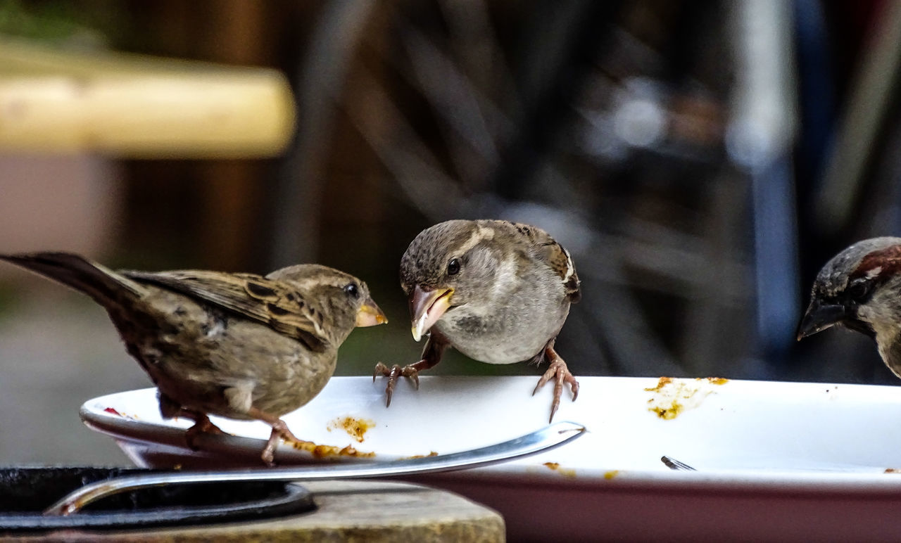 Animal Themes Bird Food Food And Drink Good Life In Berli Gourmet Indian Food Is The Best Plate Sparrows