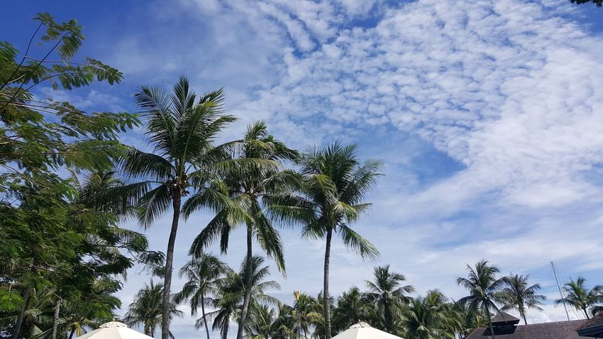 Tree Sky Palm Tree Nature Blue Low Angle View Cloud - Sky Outdoors Social Issues No People Tree Area Tree Trunk Beauty In Nature Forest Day Scenics Branch Coconut Trees Blue Sky Cloud White Clouds