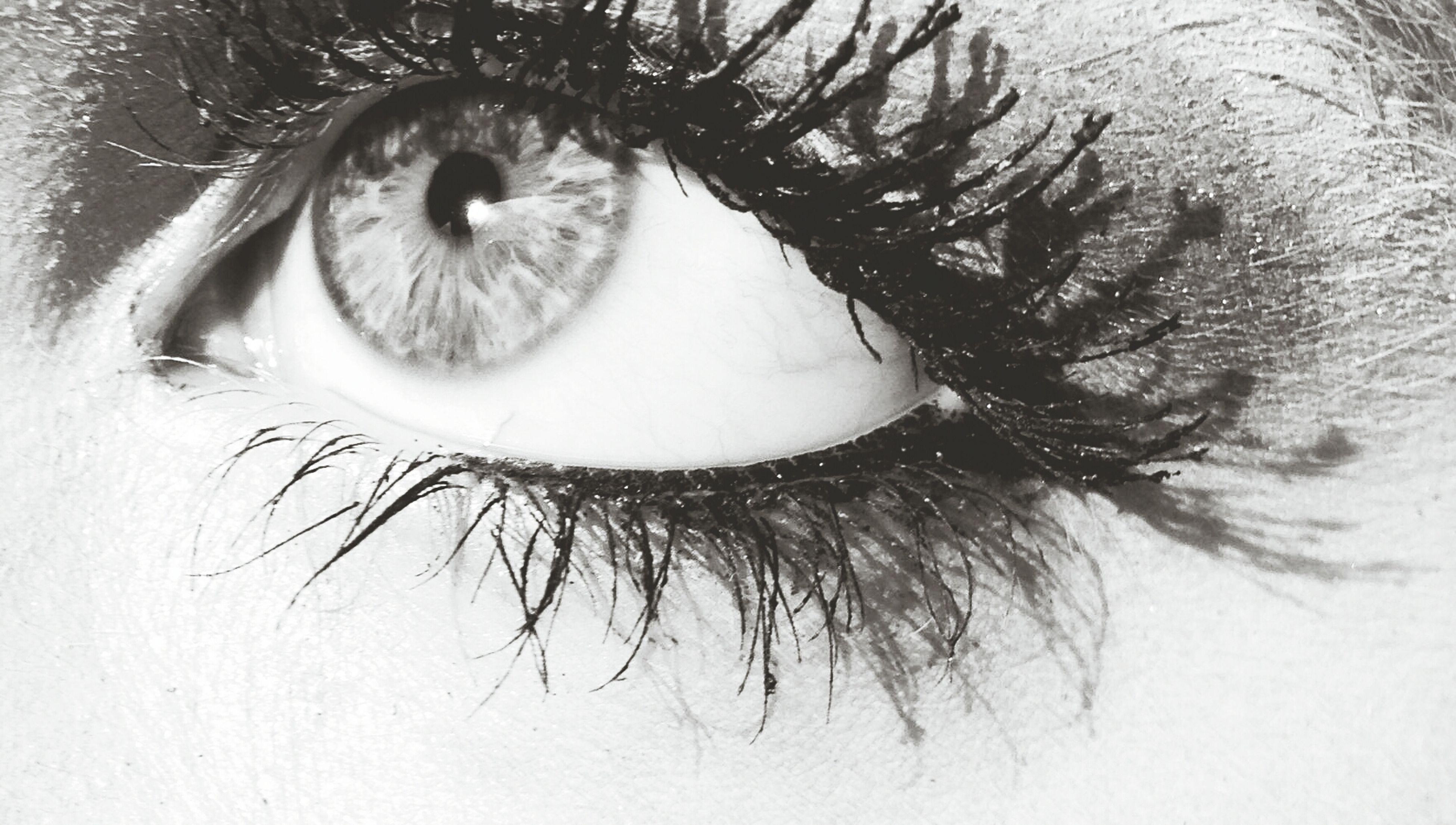 human eye, looking at camera, close-up, portrait, eyelash, sensory perception, eyesight, part of, human face, eyeball, extreme close-up, iris - eye, front view, indoors, headshot, lifestyles, human skin