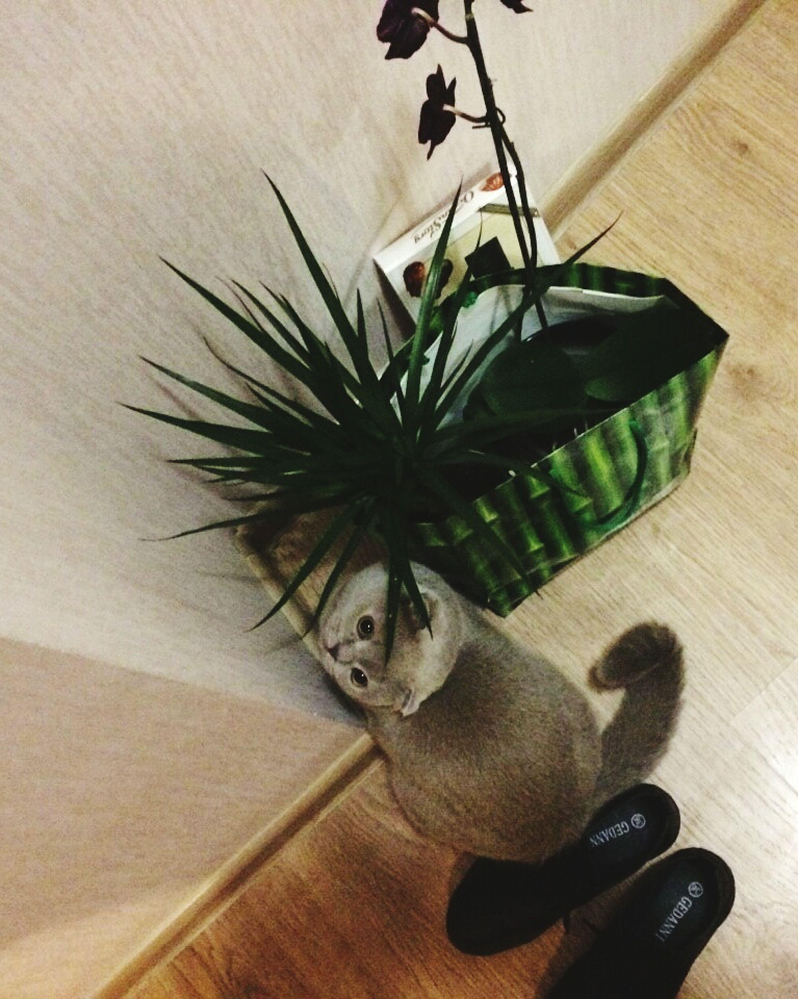indoors, close-up, flower, growth, freshness, plant, hardwood floor, fragility, flower arrangement, green color