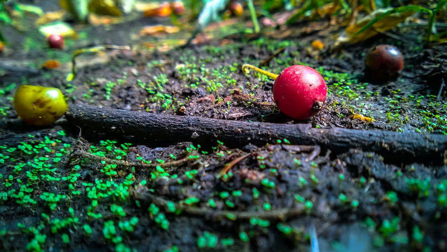 Beauty In Nature Close-up Day Field Fly Agaric Mushroom Focus On Foreground Grass Grassy Green Color Ground Growing Growth Nature No People Nokia  Nokia Lumia 920 Outdoors Plant Selective Focus Snail Tranquility