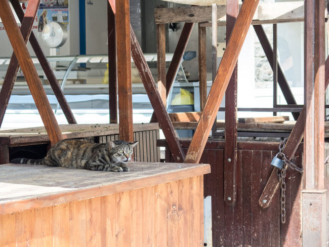 Cat Croatia Hunter Hunting Market Market Stall Old Town Stray Cat Tourism Tourist Attraction  Tourist Destination Travel Destinations Travel Photography