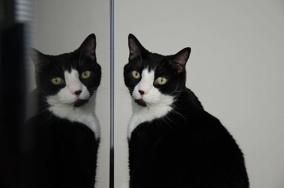 Beautiful stock photos of kitty, Animal Themes, Cat, Domestic Animals, Domestic Cat