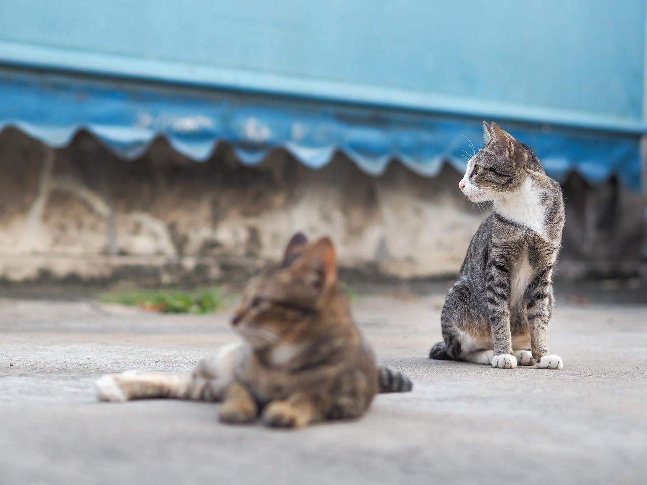Beautiful stock photos of baby katzen, animal themes, no people, domestic cat, mammal