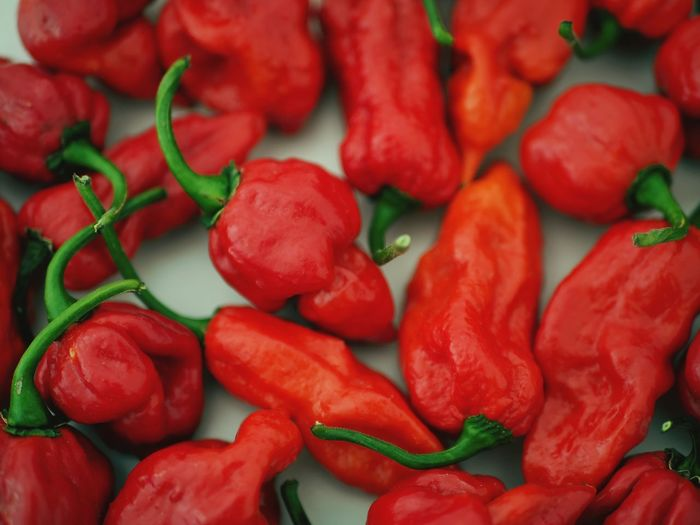 EyeEm Selects Food Red Food And Drink Vegetable Spicy Food Peperoncino Piccante Peperoncini Redhotpeppers Trinidad Scorpion Naga Morich Cibo Piccante