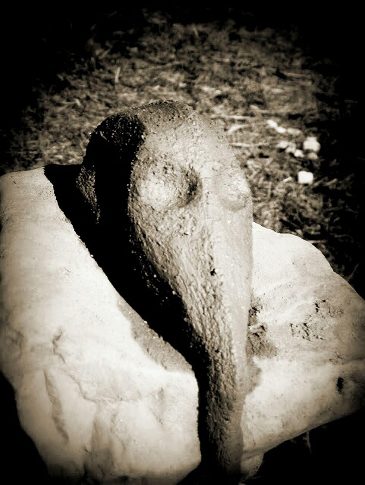 Alien Aliens Rock Dead Alien Life Universe Sculpture Alien Head Alien Life Alien Portrait Fine Art Photography