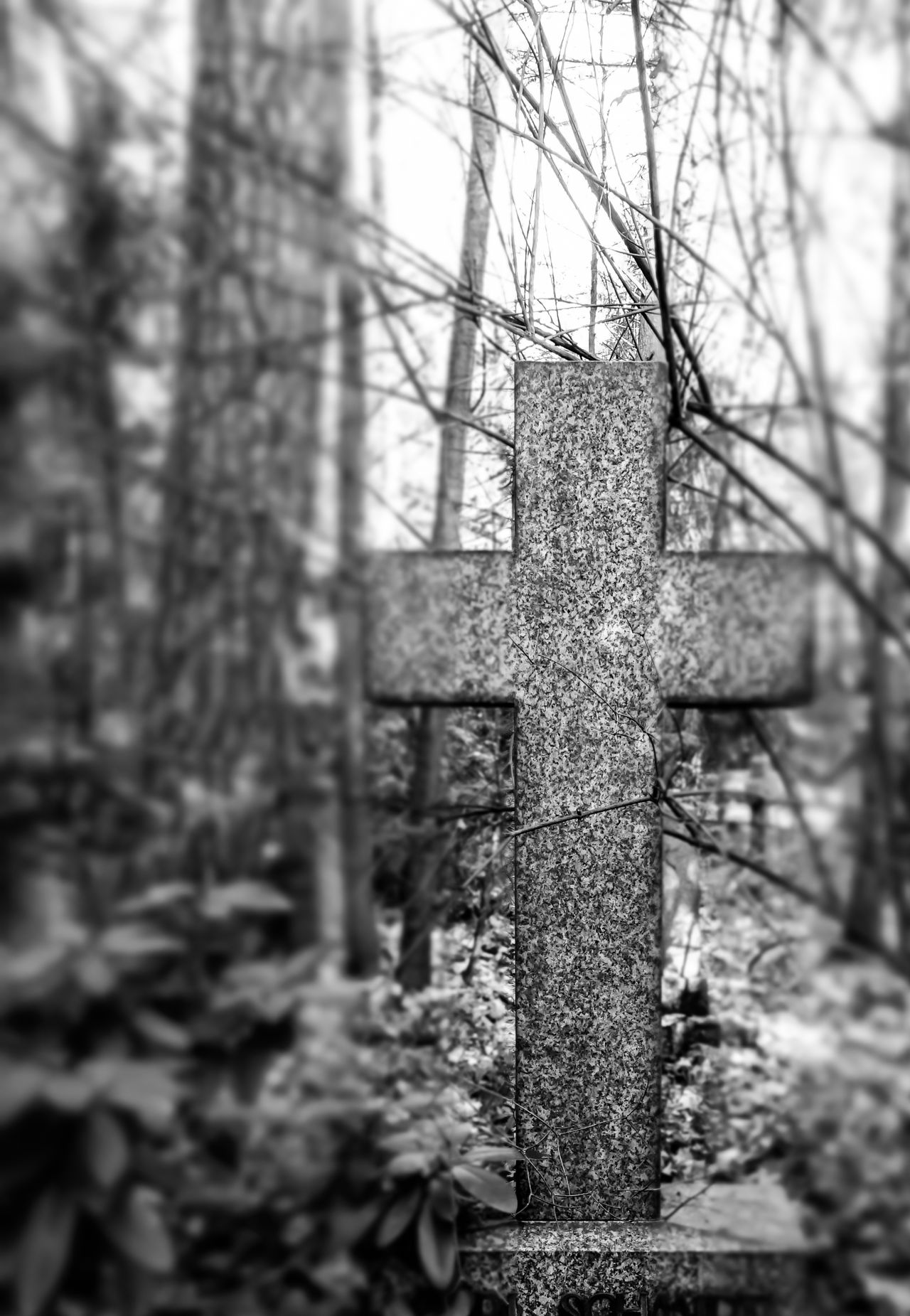 Black & White Black And White Cemetery Cemetery Photography Christ Close-up Cross Day EyeEm Best Edits EyeEmBestPics Friedhof Nature No People Outdoors Relegion Sky Tilt-shift Tombstone Tranquility Tree Tree Trunk Long Goodbye