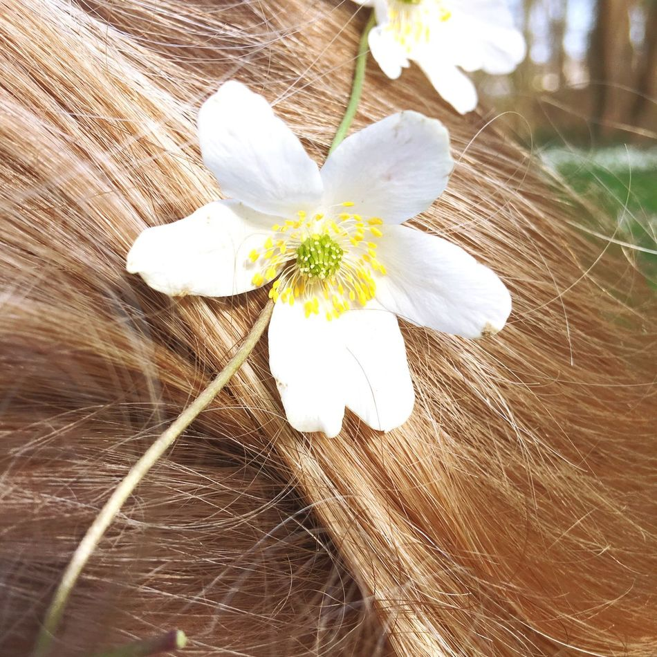 Close-up Fragility Flower Flower Head Nature Petal Blossom Beauty In Nature Growth Outdoors Day Freshness Detail Maximum Closeness Hairstyle Sunny Fresh Accesories Vintage Hair Bridal Fairy Freshness Wedding Lifestyles