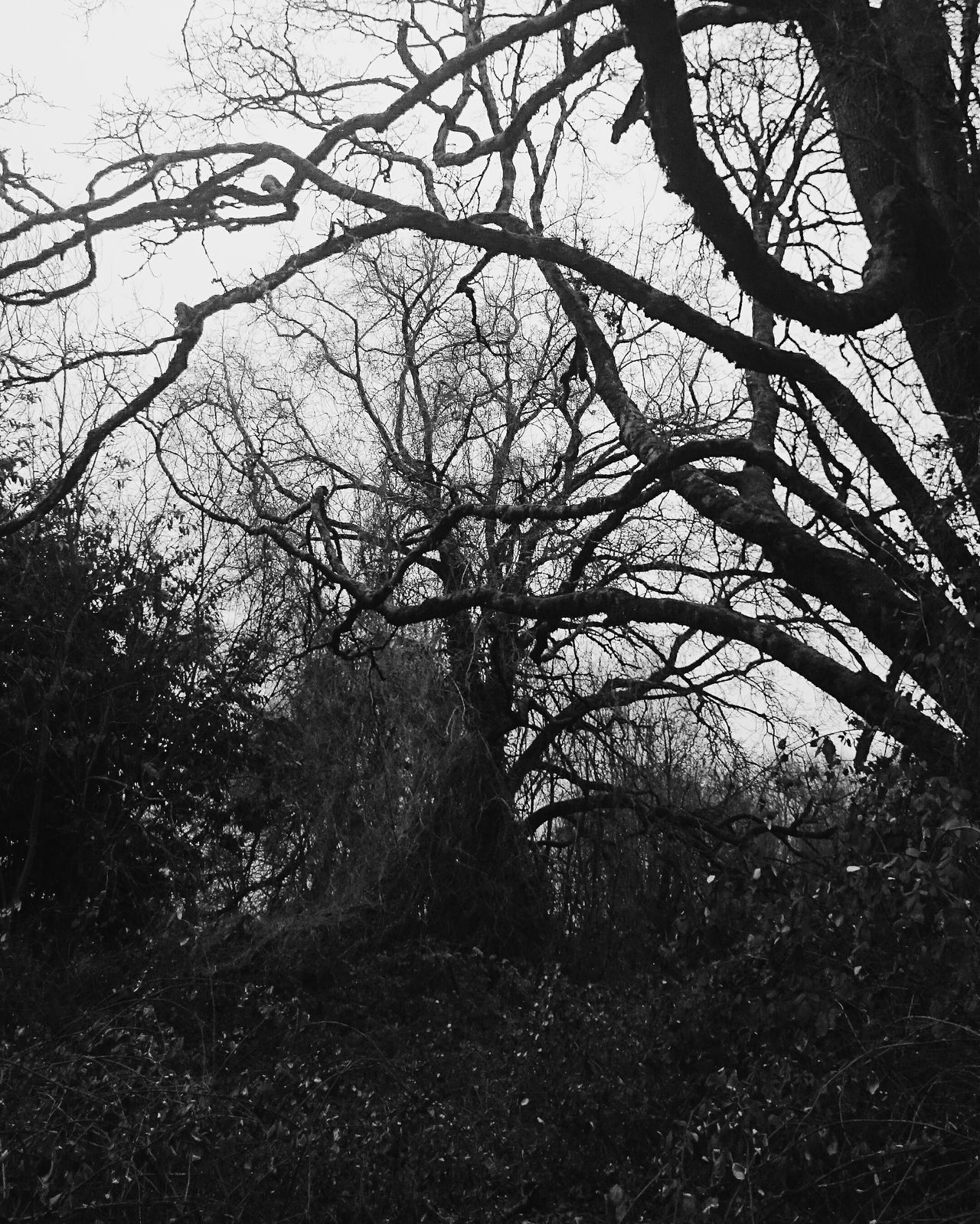 Tree Nature Branch Beauty In Nature No People Bnw Blackandwhite Monochrome Dark Horror Horror Photography High Contrast