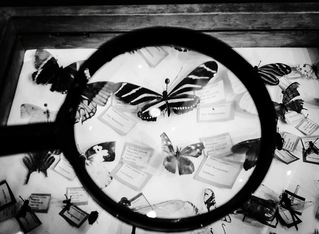 Nature_collection Butterfly ❤ Insect Photography Insect_perfection Coleccion Black & White popular Hanging Out Week On Eyeem Monochrome Photography