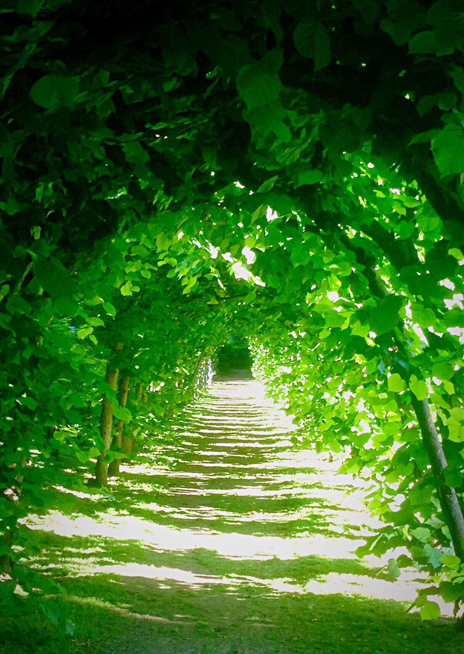 Tunnel, Green Color Nature Leaf Beauty In Nature Lush Foliage Growth No People Outdoors Plant Tranquility Day Close-up Scenics Freshness Light And Shadow Hamburg Hamburgmeineperle Shadows & Lights Park Landscape Wachokderpark Pergole