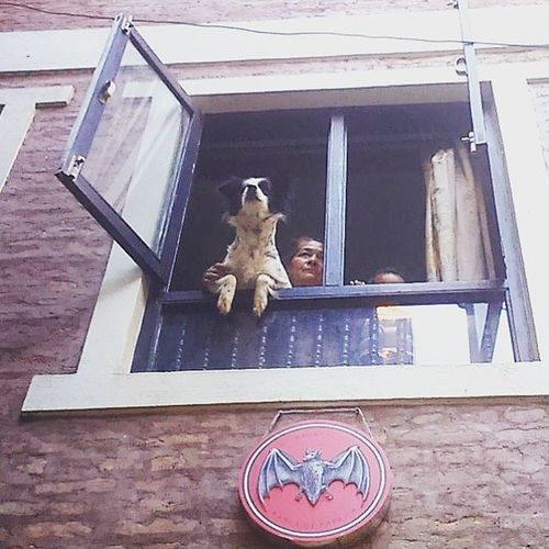 A granny along with her granddaughter and her pet peeks out of window to make sure it's safe after the nation was again hit by 6.8 ricter scale earthquake. Rebuildingnepal Nepal Nepalearthquake2015 Patandurbarsquare Saftey