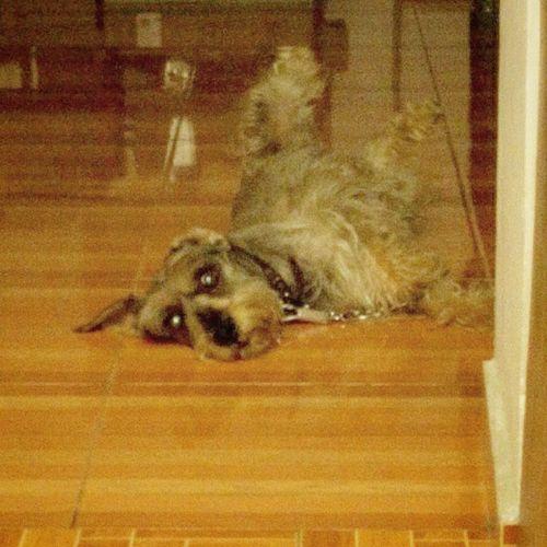 Como que alguien tiene mucha flojera... Cosmo Instadog Mydog Myfriend MAS Que Una Mascota Mi Amigo Hueva Rest Amigodevida