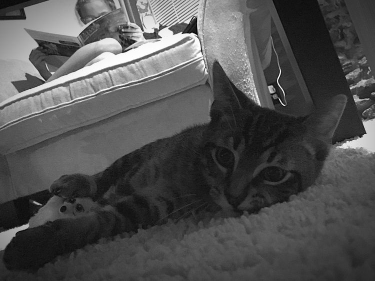 My other baby Kitty Cat Pet Pet Photography  Iphone6 Hanging Out Relaxing At Home Blackandwhite Home Is Where The Art Is