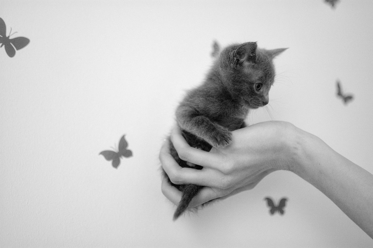 Beautiful stock photos of danke, Animal Representation, Animal Themes, Black Color, Close-Up