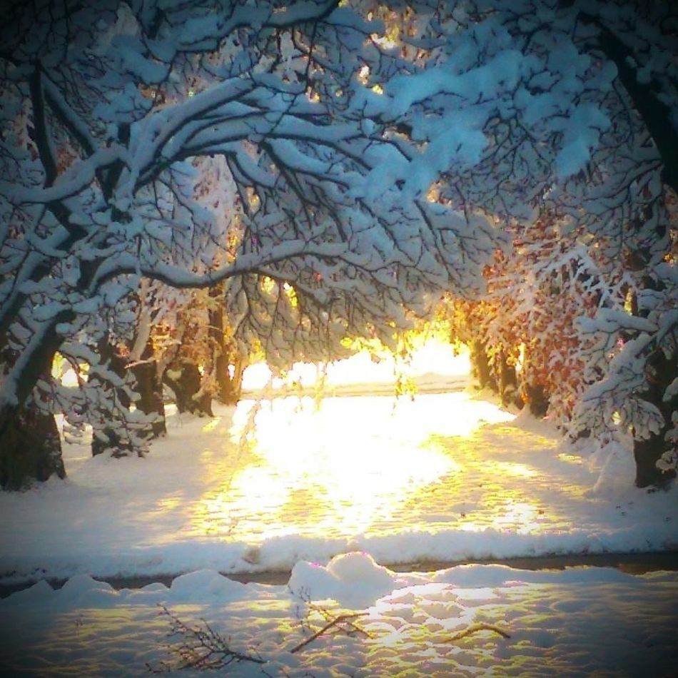 Last year.. I love this picture.. Nature Check This Out Dramatic Snowing Whatscomingsoon Eye Em Nature Lover Eyeemwinter Eyeemcrystals Outside Photography Beautiful Nature Beautiful View Sun Light Shadow