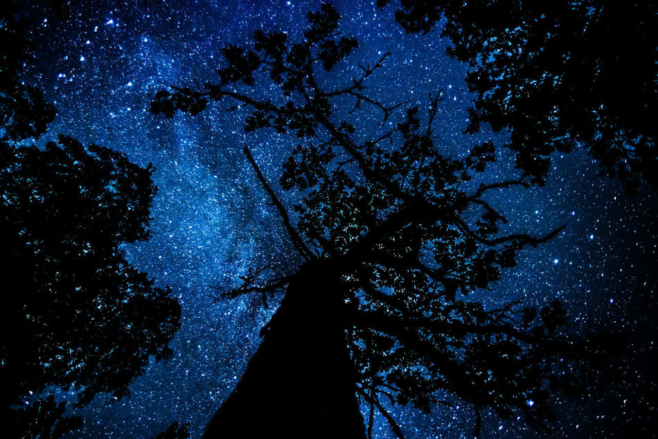 God, can you see me? Beauty In Nature Blue Backgrounds Tranquility Nature Forest Long Exposure Milkyway Sweden Tree Astronomy Astrophotography Växjö  Star Stars