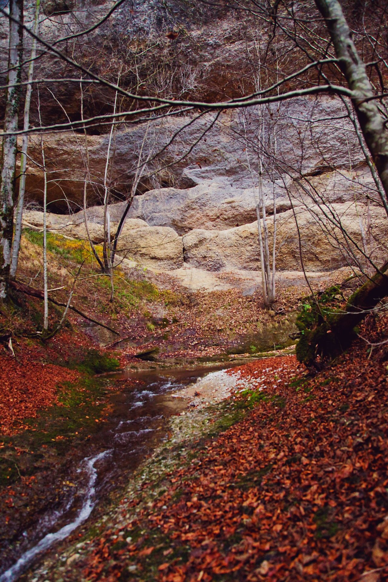 Tree Forest Stream Leafes Autumn Rocks Rock Wall With Trees Rock Wall Nature Landscape Leaf Autumn No People Nature Day EyeEmNewHere