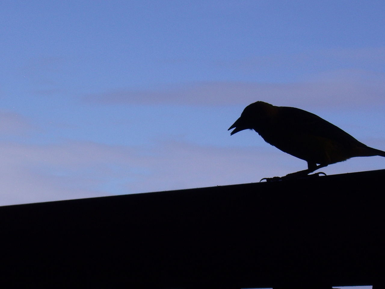 silhouette, animal themes, bird, animals in the wild, one animal, low angle view, no people, crow, copy space, animal wildlife, raven - bird, outdoors, nature, perching, sunset, sky, day, close-up