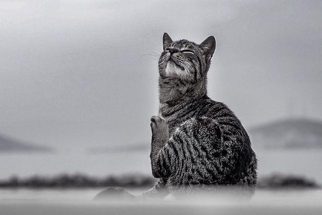 Bisgen Animals Cat Blackandwhite Relaxing Smile EyeEm Best Shots Enjoying Life Streetphotography Istanbul