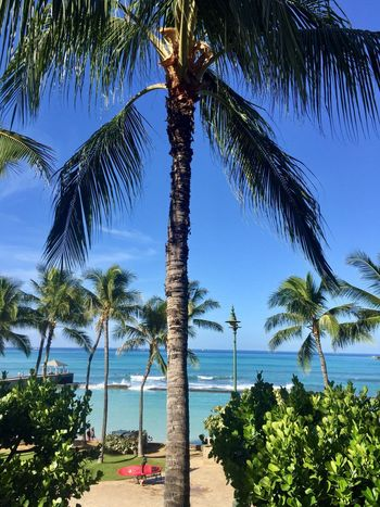 Waikiki Beach Palm Tree Tree Ocean Pacific Ocean View Beauty In Nature Blue Beach Growth Tranquil Scene Nature Sky Water Idyllic Tropical Climate Horizon Over Water Clear Sky One Person Outdoors Lost In The Landscape Island Of Oahu, Hawaii Second Acts Oahu Oahu / Hawaii An Eye For Travel