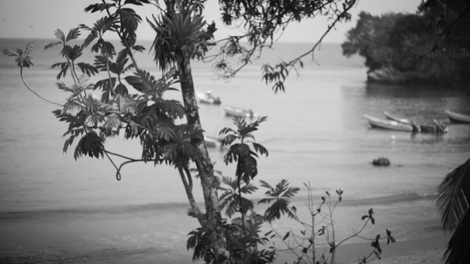 Nature Water Tree Lake Outdoors Day Beauty In Nature Plant Tranquility Growth Scenics No People Sky Beachphotography Blsckandwhite Beach Photography Beauty In Nature Outdoor Pursuit The Spaces Thespacesilike The Secret Spaces