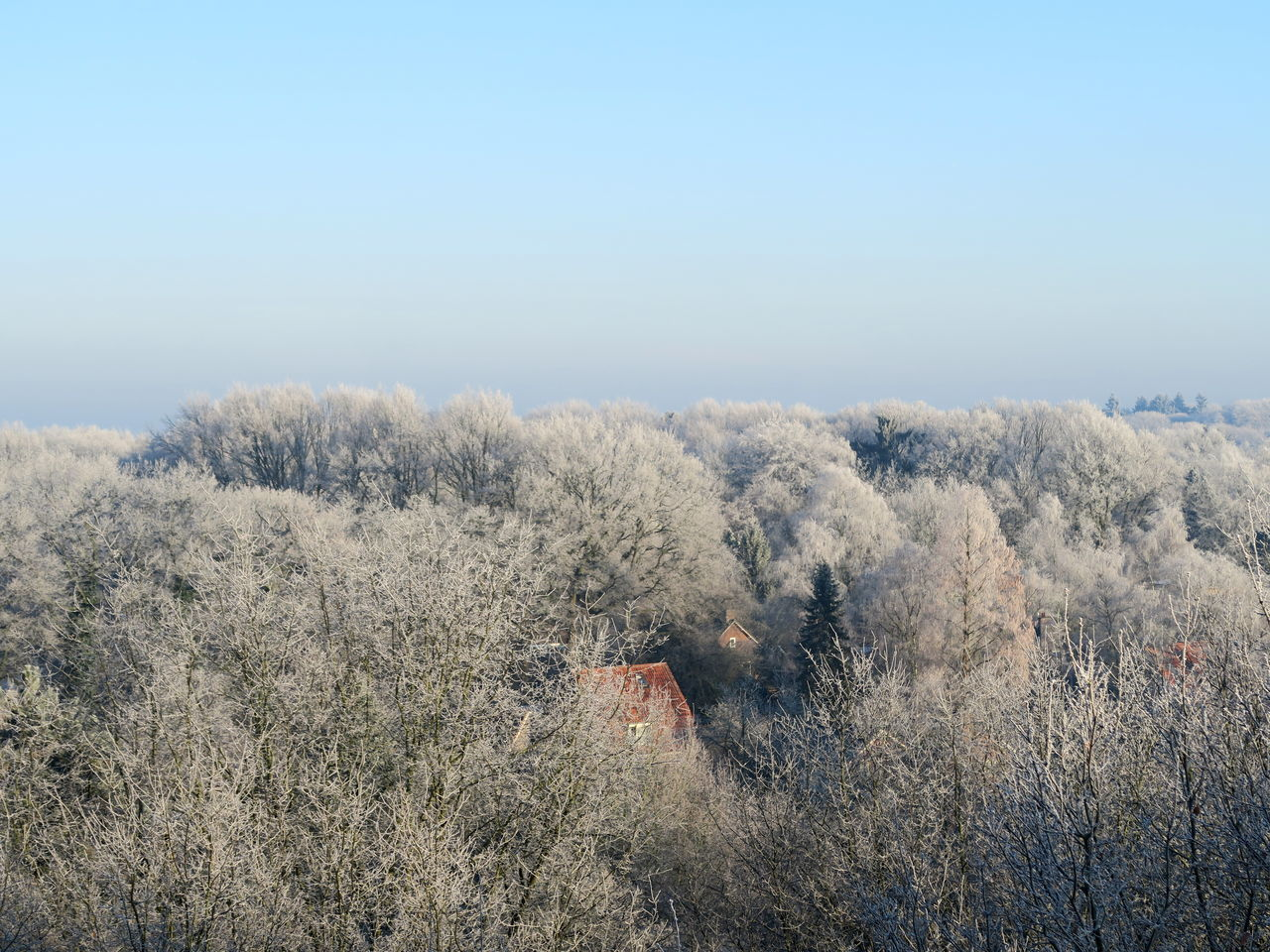 Room with a View: Frosted Trees till the Horizon Beauty In Nature Clear Sky Colors Of Nature Colours Of Nature Day EyeEm Best Shots Frost Frosted Nature Frosted Trees Glazed Frost Growth Horizon Over Land Ice Tree Nature Nature On Your Doorstep Nature_collection No People Outdoors Sky Tree Trees And Sky Winterland Winterlandscape Winterwonderland WinterWonderland❄️