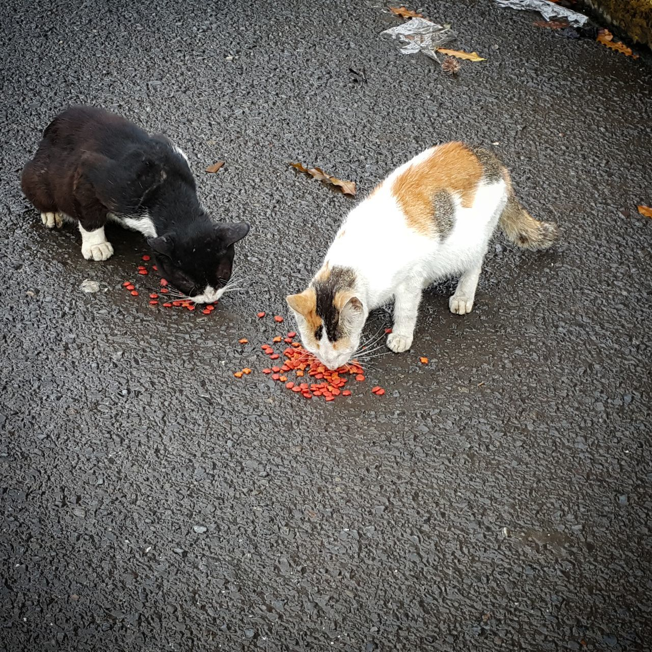 Animal Themes Outdoors No People Street Cats Feeding Cats Day Cats Of EyeEm Hungry Cat