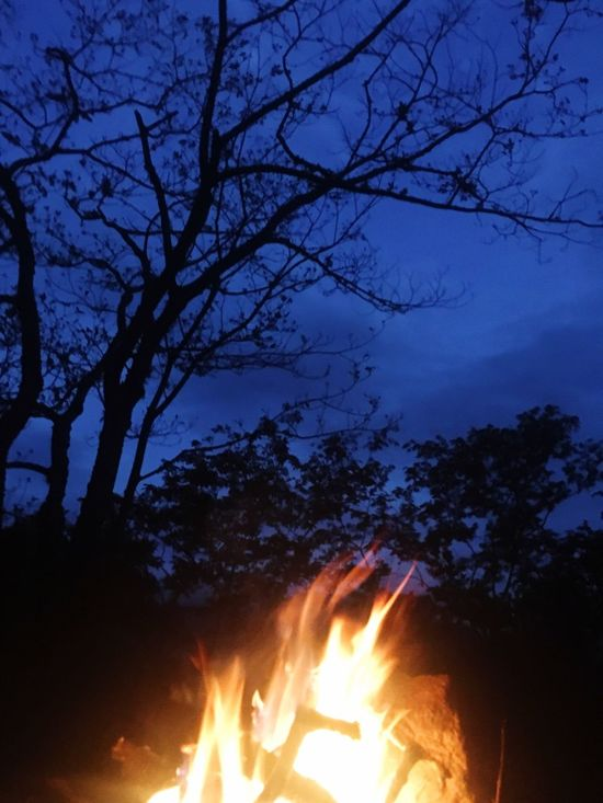 Night! Illuminated Night Glowing Silhouette Flame Tree Fire - Natural Phenomenon Dusk Burning Heat - Temperature Blue Sky Vibrant Color Outdoors people and People And Places places Campfire Firewood Tranquility Fire