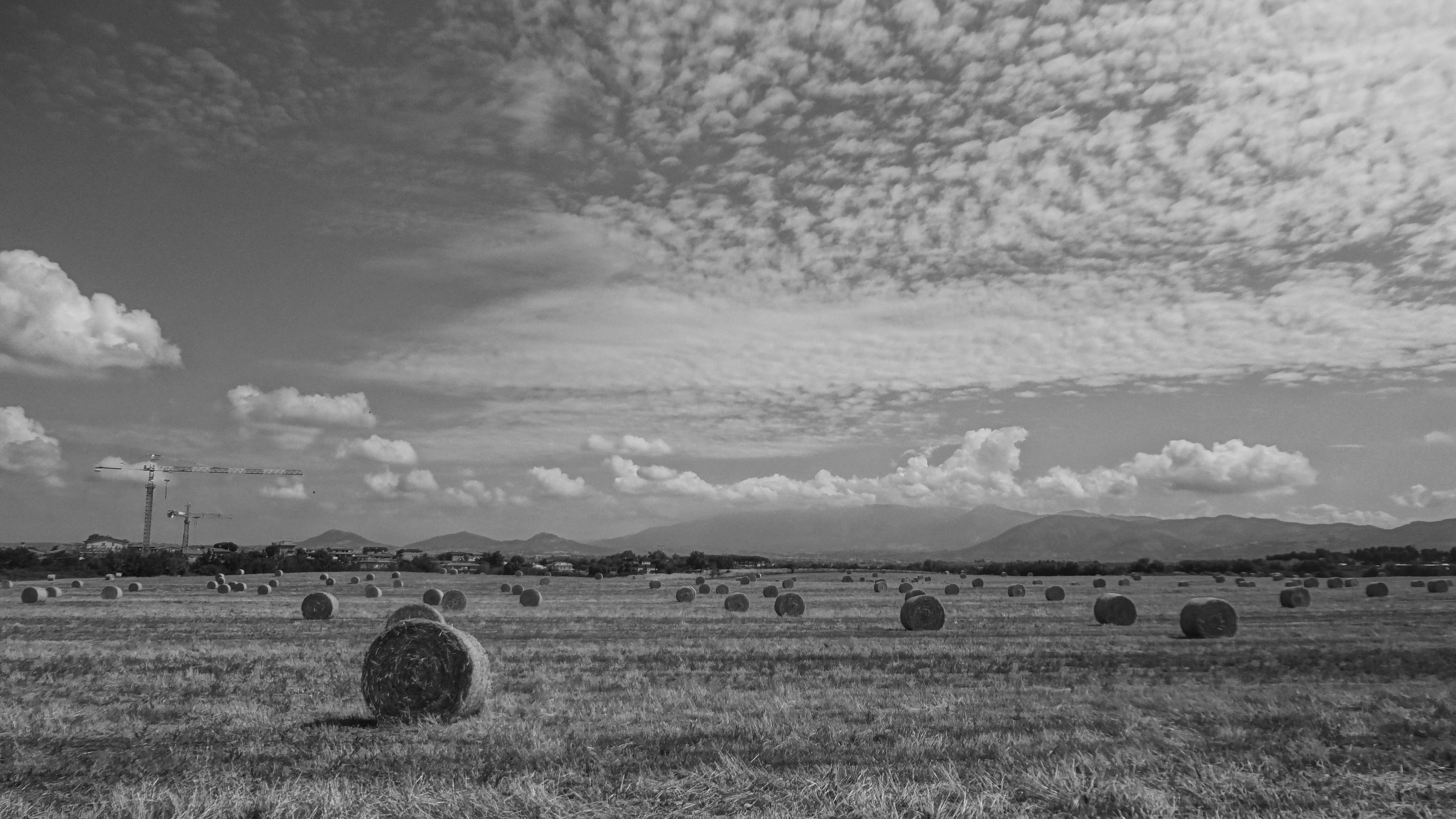 agriculture, rural scene, sky, nature, landscape, cloud - sky, outdoors, no people, tranquility, scenics, beauty in nature, bale, day, tree, hay bale