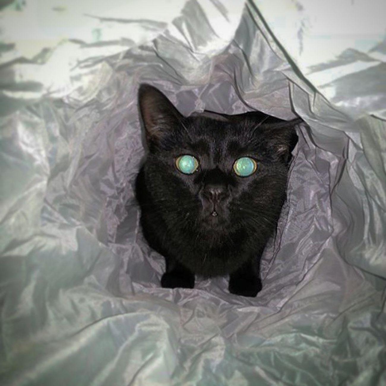 Schau mich an Catsofworld Catsmosh Cats 🐱 My Cats Kontraste Tiere♡