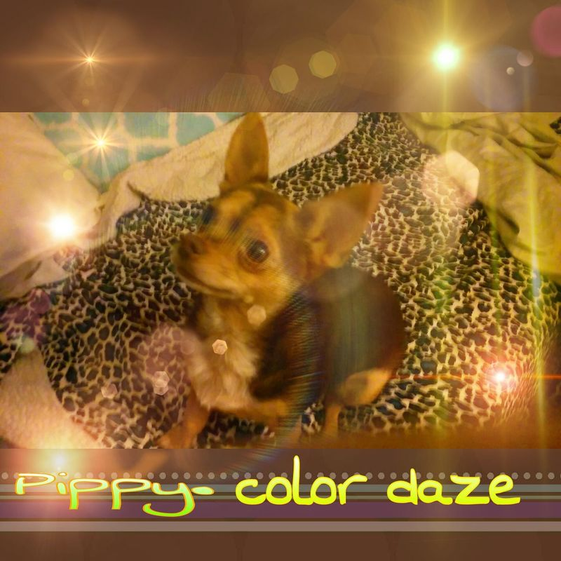 Pippy. Color Daze. Festval Colors. Expession Dog Daze Day. Colorful. Check This Out