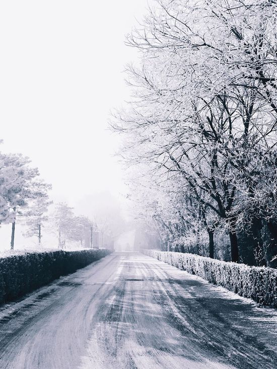 Wintertime Winter Snow Cold Weather Icy Road Shrubs Trees Misty Morning Winter Wonderland White