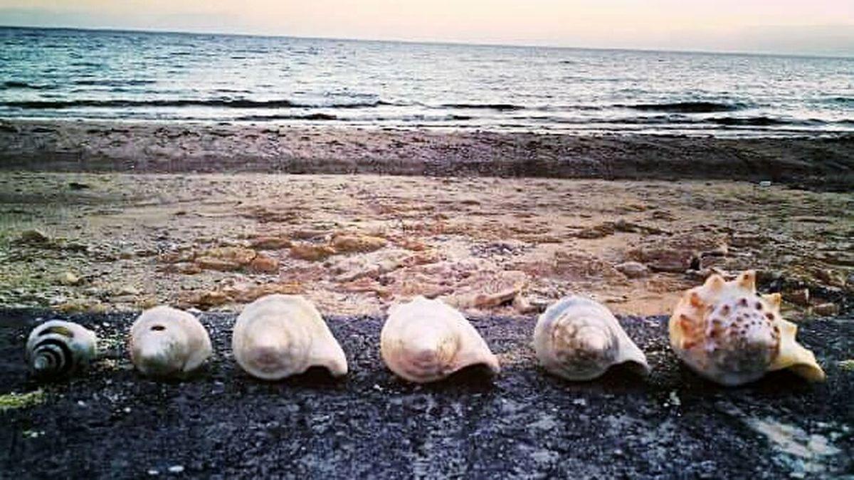 Seashells Conch Shells Ocean Bahamas Eleuthera Eleuthera, Bahamas Beach James Cistern