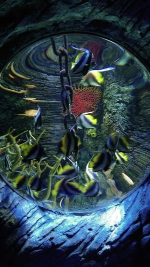 Sealife Fish Check This Out Capture The Moment Check It Out Colors Enjoying Life EyeEm Best Shots Eye For Photography Notes From The Underground Taking Photos Aquarium Aquarium Life Aqua The Purist (no Edit, No Filter) Blue Mobilephotography HTC_photography