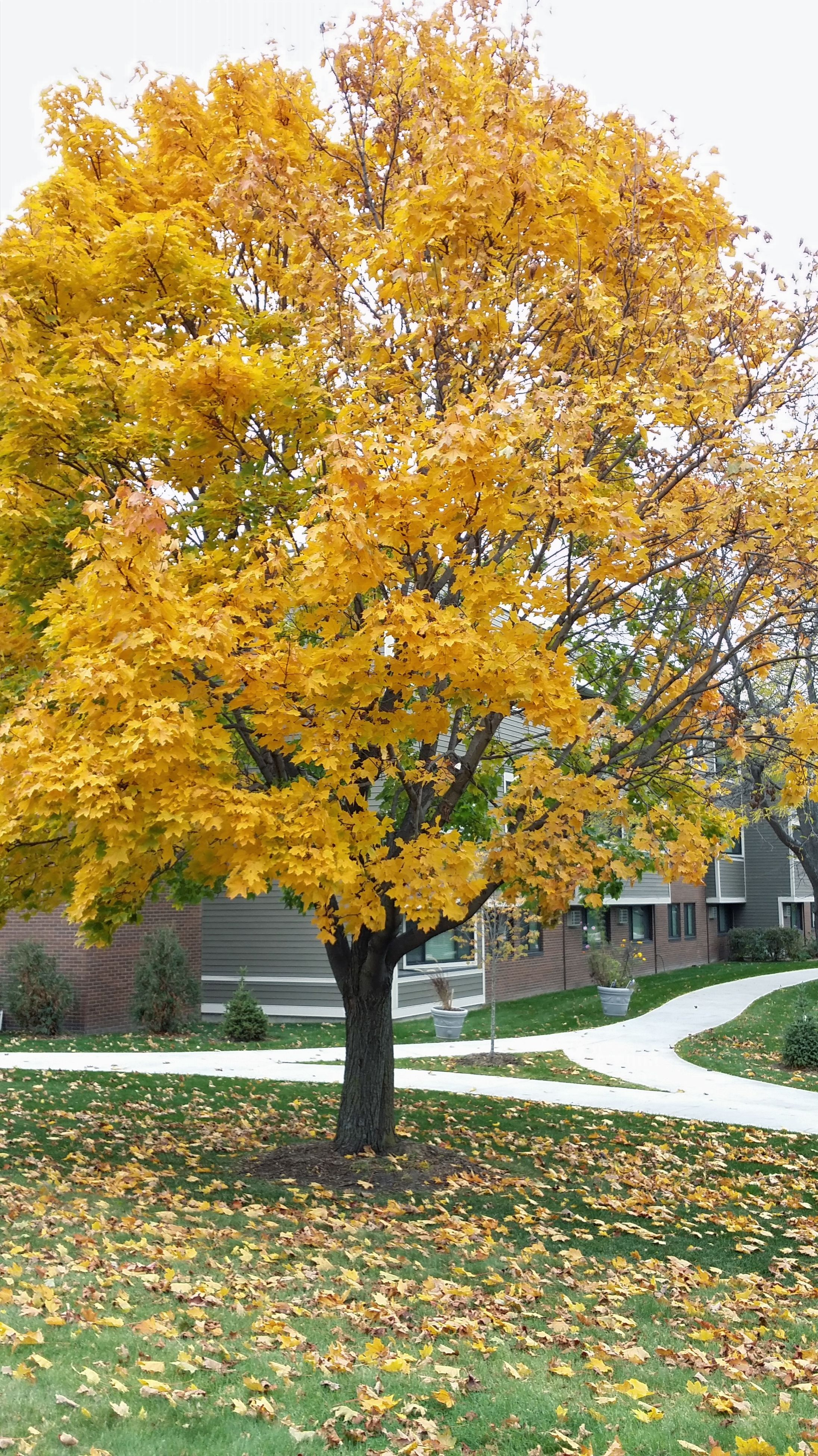 autumn, yellow, change, season, tree, building exterior, built structure, growth, leaf, architecture, field, nature, clear sky, beauty in nature, flower, day, grass, house, park - man made space, sunlight