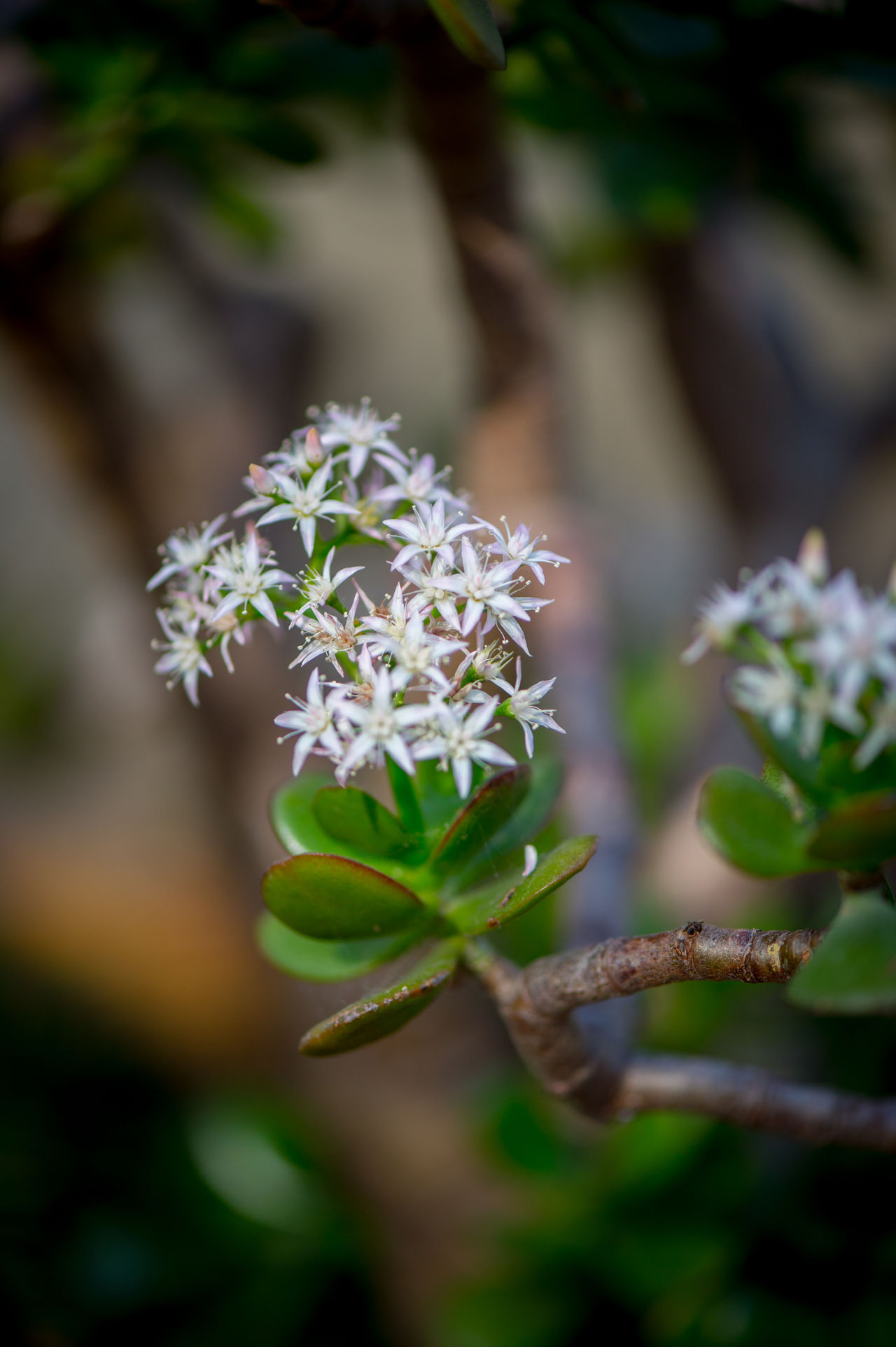 ©Amy Boyle Photography Beauty In Nature Close-up Day Flower Freshness Green Color Growth Leaf Nature No People Outdoors Plant