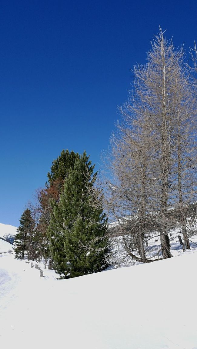 Hello World Check This Out Bright Snow Day Sunny Day Blue Sky Sky_collection Enjoying Life Snow Trees Nature_collection Winter Winter Wonderland Switzerland_2016 in Sertig, Switzerland